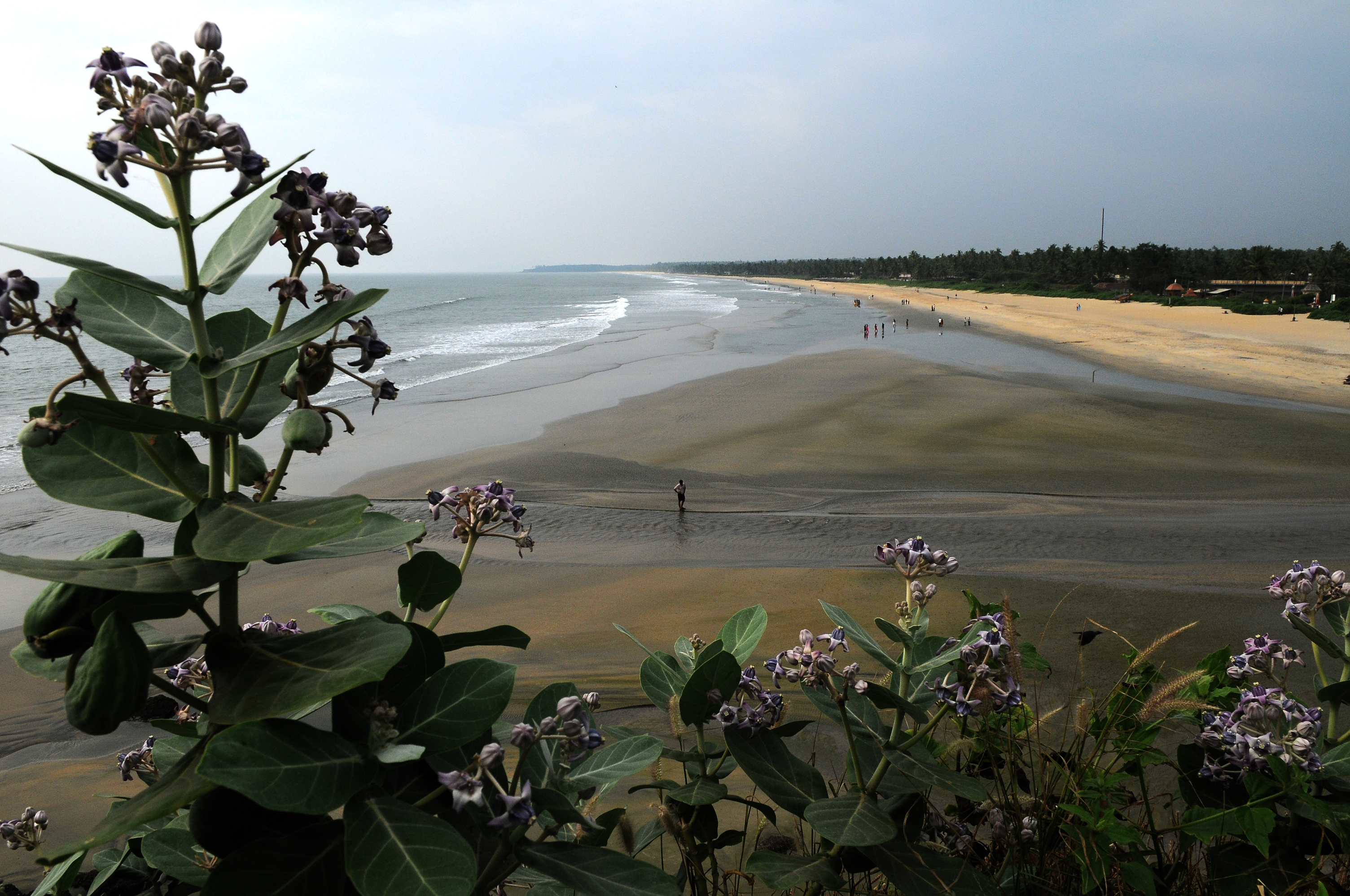 Best Beaches in Kerala - Payyambalam Beach