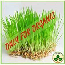 Only for Organic ! Hybrid Wheat Grass Seeds : 900 Grams ! for Rs. 299