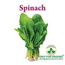 Only for Organic ! Hybrid Spinach Seeds : 500 Seeds ! for Rs. 149