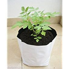 Buy Cocogarden UV Stabilized Poly Growbag Set (28 cm x 28 cm x 48 cm, White, Pack of 5) from Amazon